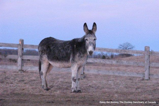 Donkey Sanctuary.jpg