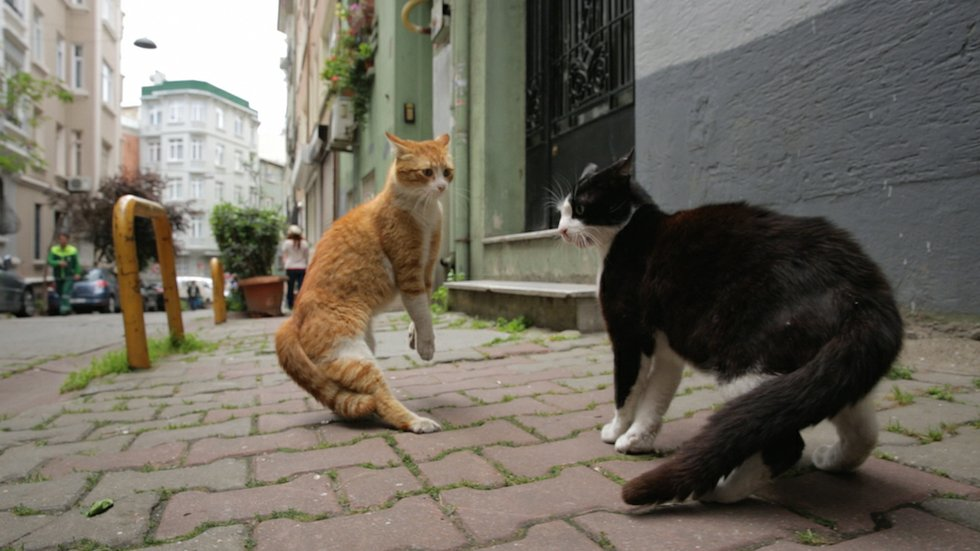 Kedi Is A Purr Fectly Therapeutic Film For These Times Now Magazine