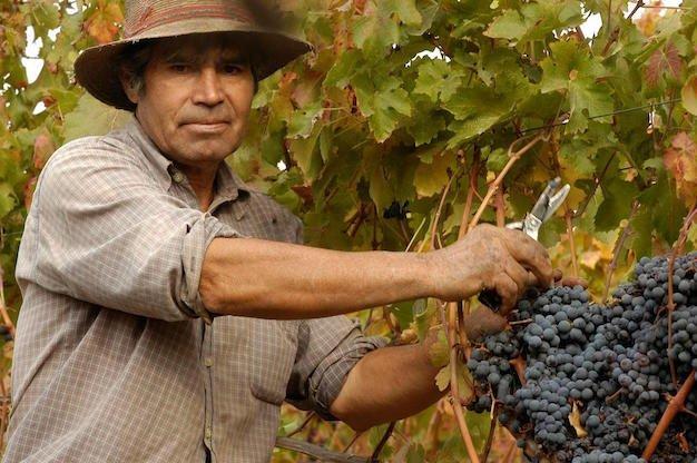 Vineyard Staff_Bloque Herencia_Santa Carolina.JPG