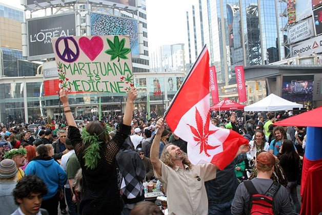 marijuana7_large.jpg