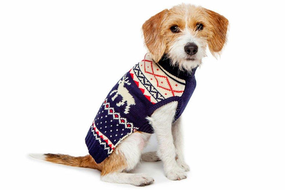 Fabdog-Sweater.jpg