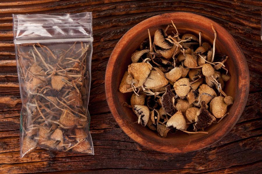 Dried magic (psilocybin) mushrooms.