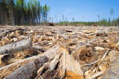 Logging in Saskatchewan