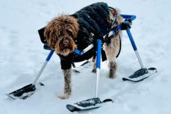 NOW Toronto Pet Photo Contest 2021 Winner
