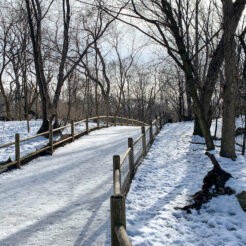 A photo of High Park in Toronto in winter