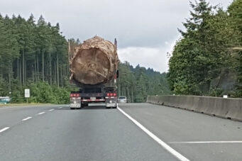 A photo of a log from an old-growth tree on the back of a truck